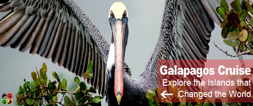 Galapagos Island Wildlife Holiday